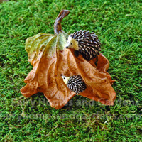 Miniature hedgehogs playing on autumn leaf