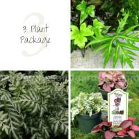 3 Terrarium Plant Package