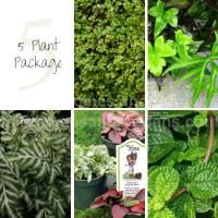 5 Terrarium Plant Package
