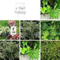 7 Terrarium Plant Package