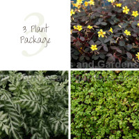 3 Indoor House Plant Package