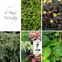5 Indoor House Plant Package