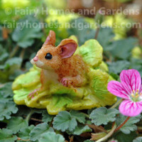 Miniature Mouse in Lettuce