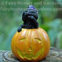 Miniature Black Cat in Jack o' Lantern