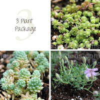 3 Miniature Plant Package