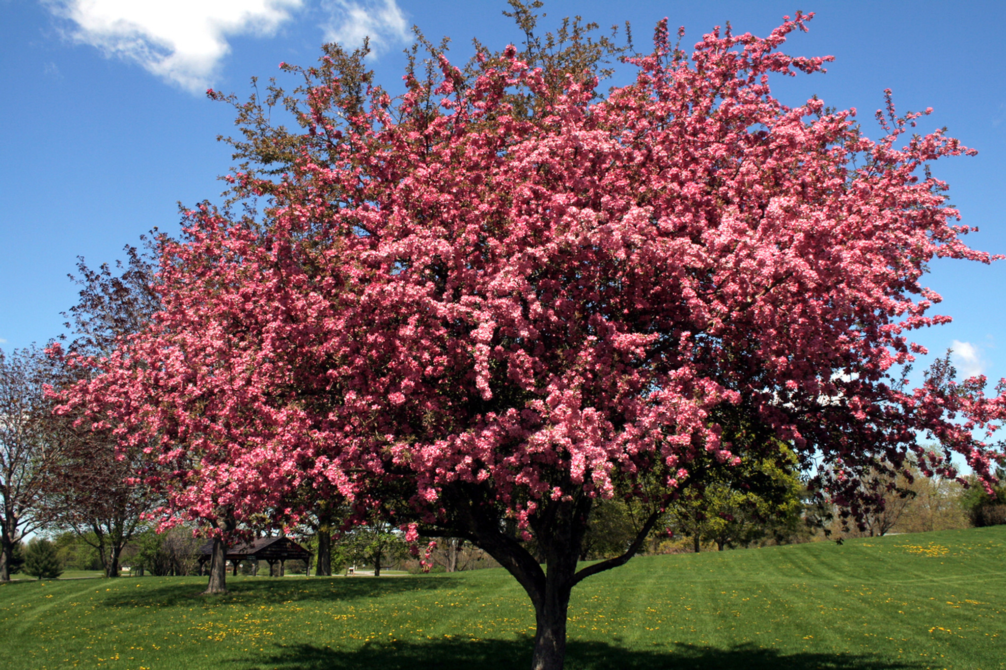 The Most Vibrant Flowering Trees