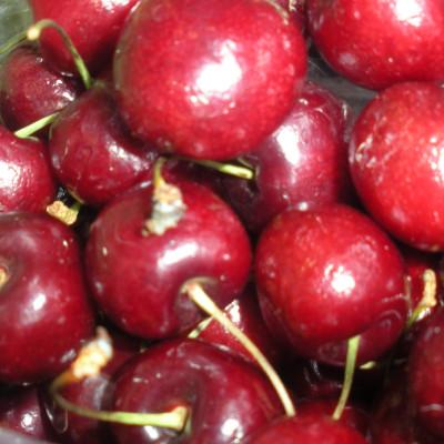 Prunus 'Bing'