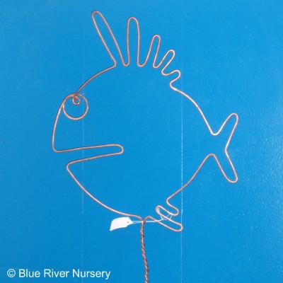 Wire Blowfish