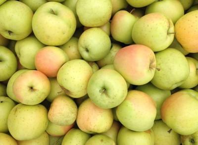 Malus apple 'Honeygold'