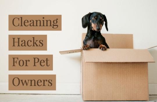 cleaning-hacks-for-pet-owners