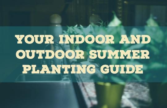 indoor-outdoor-plants