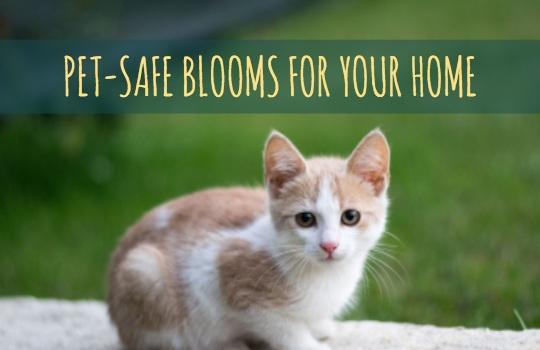 pet-safe-blooms