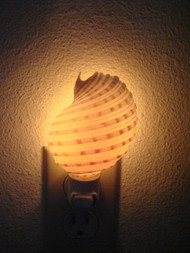 Spotted Banded Tun Shell Nightlight