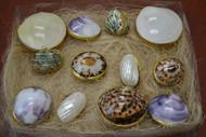 Assort Seashell Storage Trinket Boxes