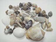 100 Pcs Small Tiny Mix Seashell Beach Craft