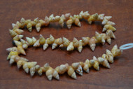 100 Pcs Small Brown Nassa Seashell Beads Strand