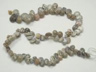 100 Pcs Small Brown Nautilus Seashell Beads Strand