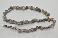 100 Pcs Small Black Nautilus Seashell Beads Strand