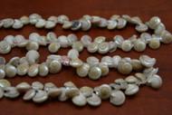 100 Pcs Small White Nautilus Seashell Beads Strand
