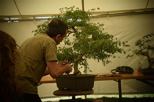 Bonsai Workshops Classes And Events New England Bonsai Gardens