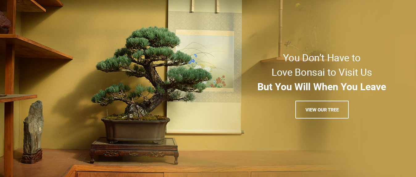 You Don't Have to Love Bonsai
