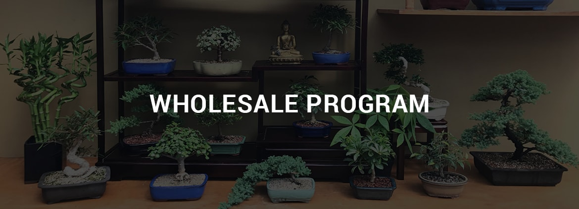 Wholesale Bonsai Nursery New England Bonsai Gardens