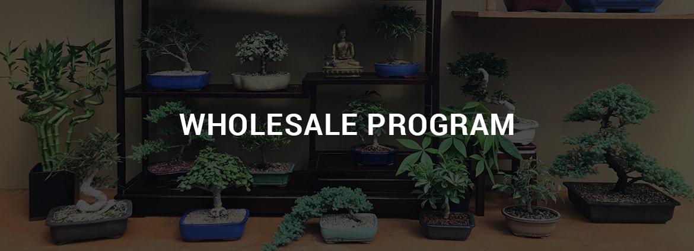Wholesale Bonsai Nursery New England Bonsai Gardens