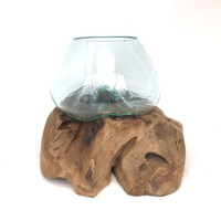 Glass Terrarium Molded on Driftwood (SQ)