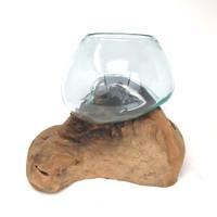 Glass Terrarium Molded on Driftwood (SO)