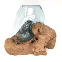 Glass Terrarium Molded on Driftwood (MM)