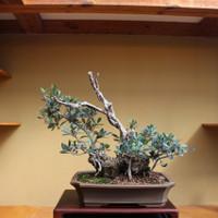 Wild Olive (TM_56WildOlive)