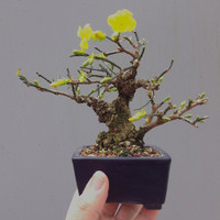 John Romano - The Magic of Shohin Bonsai Workshop (July 29, 2018)