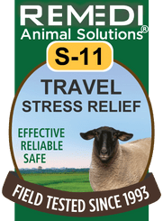 Travel Stress Relief for Sheep