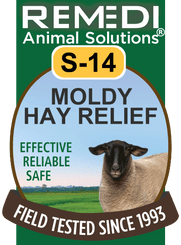 Moldy Hay Relief for Sheep