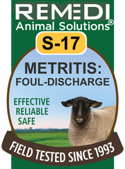 Metritis: Foul Discharge for Sheep