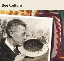 bee-culture-btn.jpg