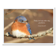 "Wintering Bluebird New Years Card cover photo shows Eastern bluebird fluffed up against the cold and the Lewis Carroll quote, ""Today isn't any other day, you know"""