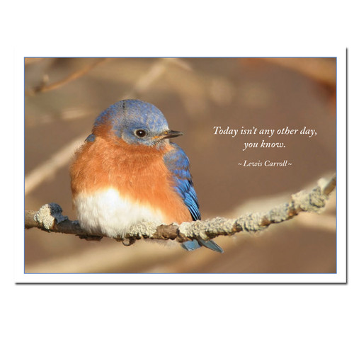 Boxed Birthday Cards Bluebird For Business and Professional use – Boxed Birthday Cards