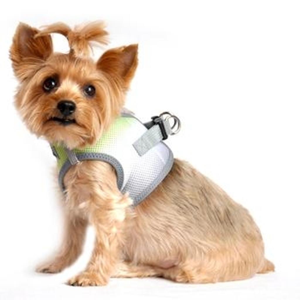 Choke Free Ombre Mesh Dog Harness - Limestone Grey