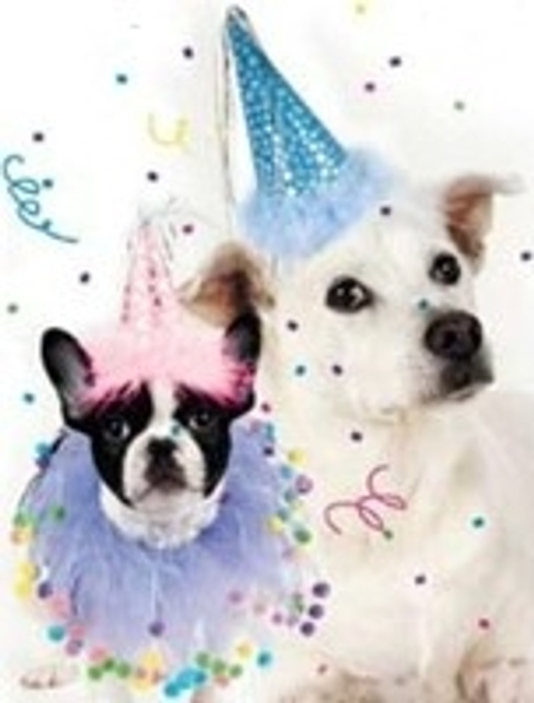 Dog Party Hat