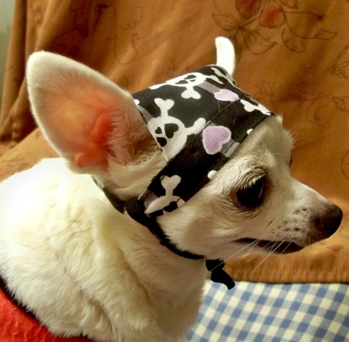 Girly Skull Dog Doo Rag