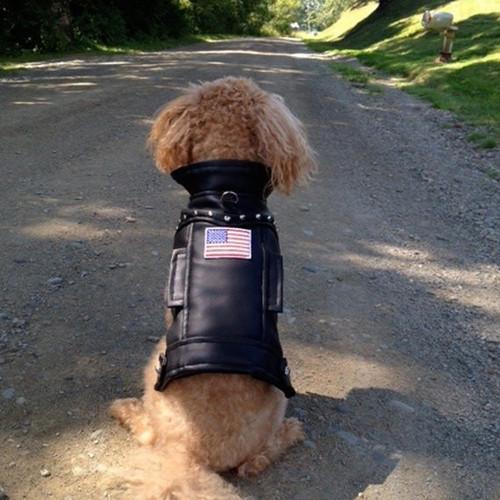USA Faux Leather Biker Dog Jacket