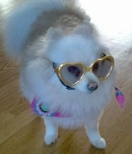 Gold Heart Shaped Dog Sunglasses