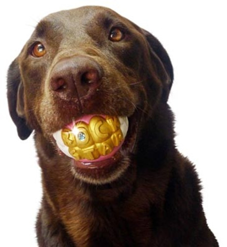 rock star bling gold teeth dog toy ball