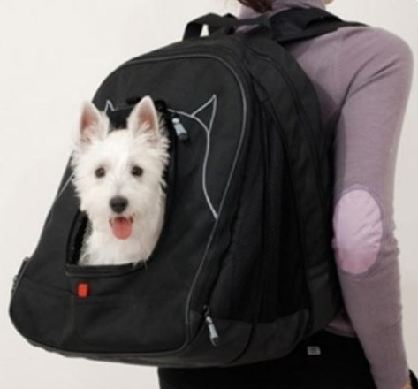 How to Keep your Pet Safe while Traveling