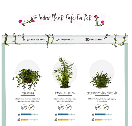 SAFE Plants & TOXIC Plants for Pets - Check out our handy Infographic Guide
